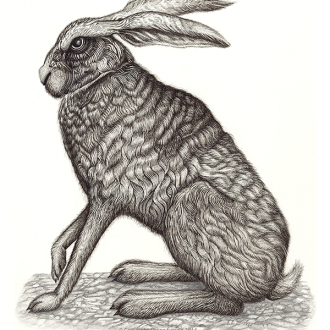 Silver hare illustration