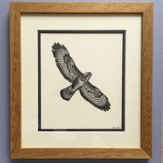 My framed buzzard drawing