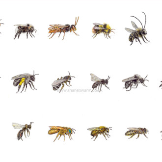 Eighteen Extinct Bees of England