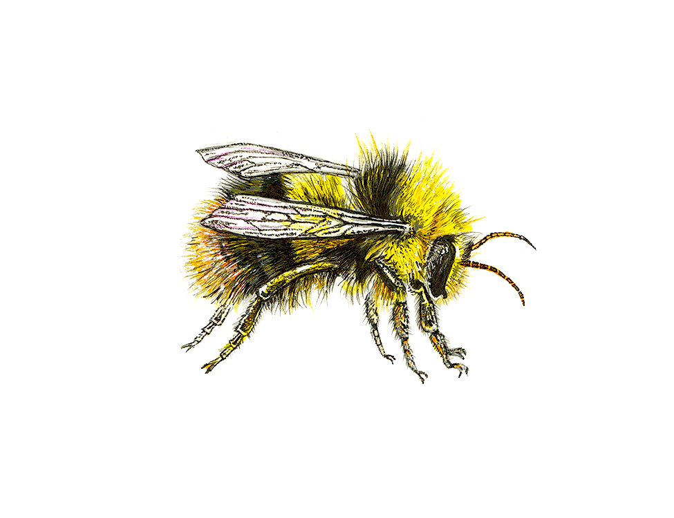 bee-assembly-a3-300px-copy