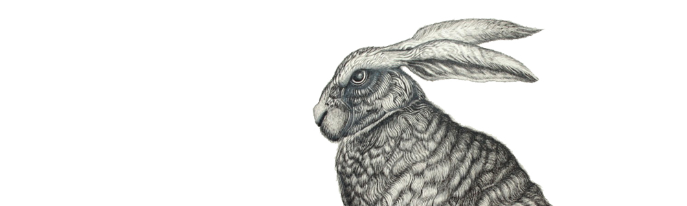 silver hare original illustration shane swann
