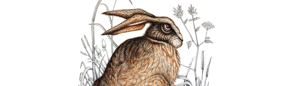 Grumpy Hare shane swann original illustration